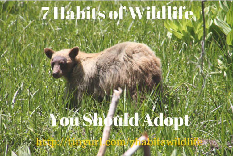 7 Habits of Wildlife you should adopt